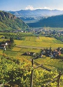 Weinproduzenten Südtirol